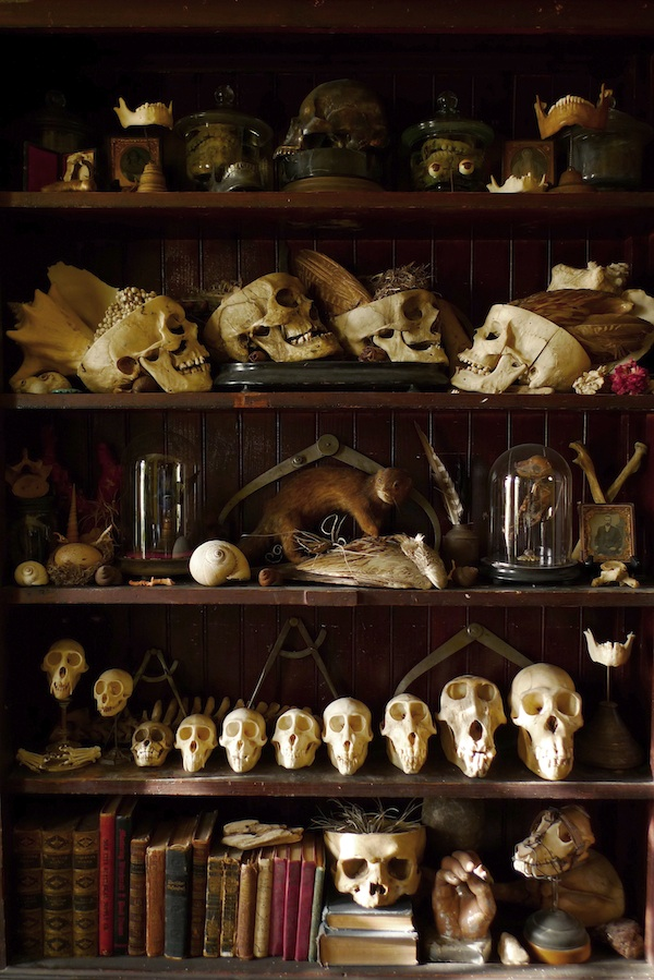One of Cohn's personal cabinets of curiosities, in his dining room. Photo by Sergio Royzen.
