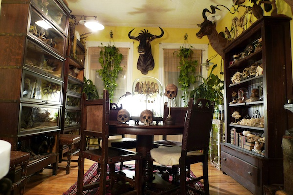 "The dining room of Ryan Matthew Cohn's Brooklyn apartment. The co-host of The Science Channel's ""Oddities"" says he styled his apartment after a natural history museum. Photo by Sergio Royzen."