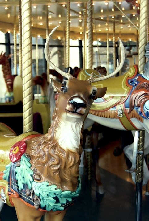 Many carousel deer, like this Herschell-Spillman one at the 1928 carousel at Van Andel Museum Center in Grand Rapids, Michigan, have real antlers. (© Jean Bennett, via carousels.org)