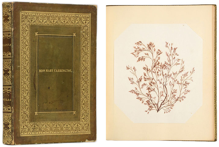"The cover of the album labelled ""Miss Mary Carrington"" and one of the book's pressed seaweed samples, circa 1830."
