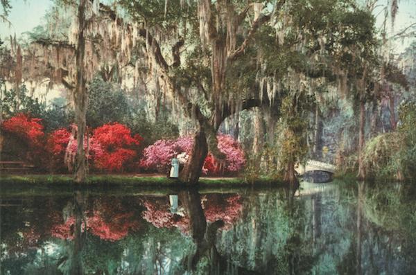 Charleston's Magnolia gardens on Ashley River, photographer unknown.