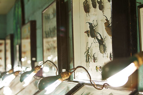 The museum's unique light fixtures were designed by John May. On the wall hangs a display of Dynastinae, or rhinoceros beetles.