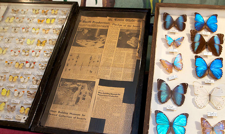 The May Museum presents its own storied past in between cases devoted to insects.