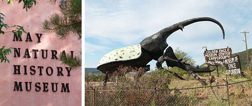 Top: Blue Morpho butterflies on display at the May Museum of Natural History. Above: The famous Hercules beetle greets visitors along Colorado Highway 115.