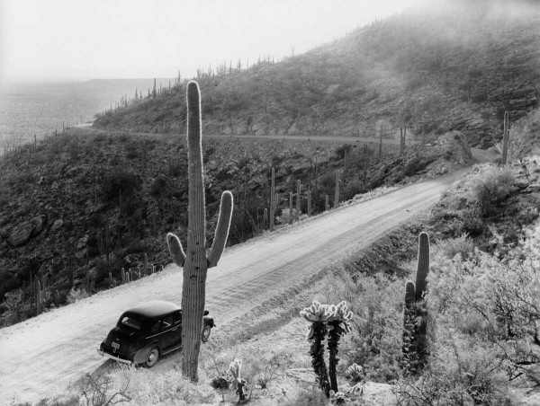 Source photo for Mt. Lemmon Road postcard by G.I. Pitchford. Courtesy Robert I. Pitchford.