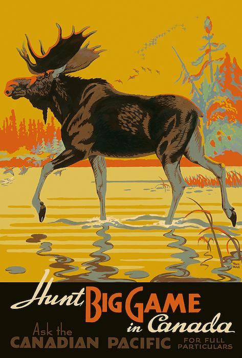 Hall Moose