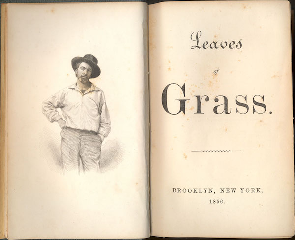 The frontispieces for both the 1855 and 1856 editions of Leaves of Grass feature a steel engraving by Samuel Hollyer—from a lost daguerreotype by Gabriel Harrison—showing a 35-year-old Whitman in laborer's clothing. (From the Drew University Library in Madison, New Jersey)