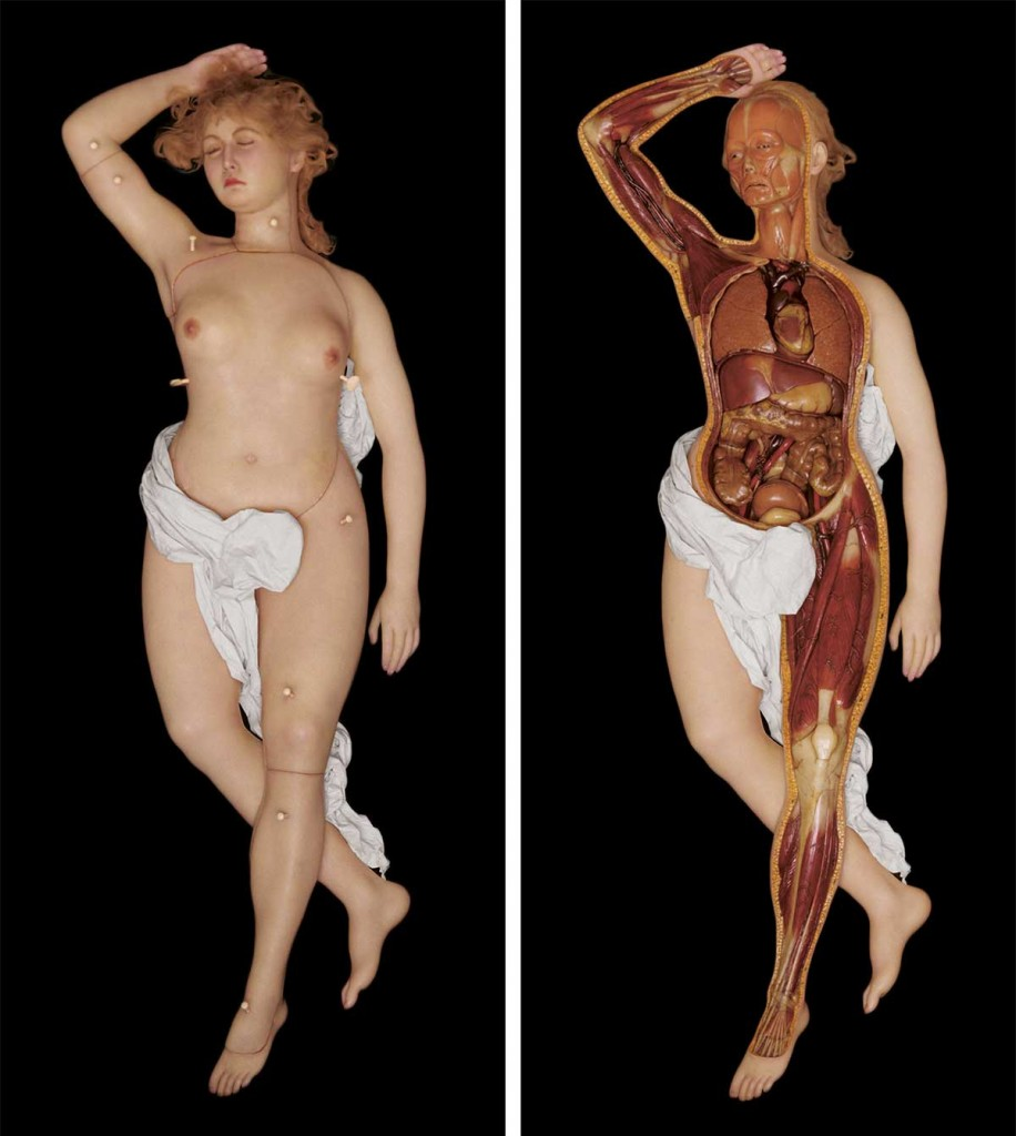 A wax Anatomical Venus shown intact and partially dissected, made in Rudolph Pohl worksop in Dresden, Germany, circa 1930. Courtesy the Münchner Stadtmuseum, Sammlumg Puppentheater/Schaustellerei, Munich.