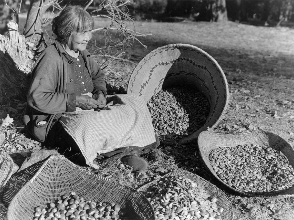 Maggie Howard, known as Tabuce, preparing acorns in Yosemite. Photograph by Ralph Anderson, 1936. Via the Mariposa County Library.