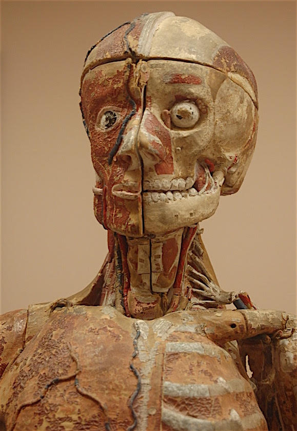 Close-up of an Auzoux anatomic male manikin, made of hand-painted papier mâché, circa 1870. (Courtesy of the Bruce Museum)