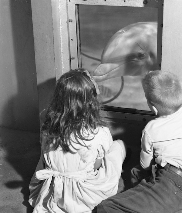 Children looking at a bottlenose dolphin at Marine Studios in St. Augustine, Florida, in 1948. (Courtesy of the Florida Photographic Collection)