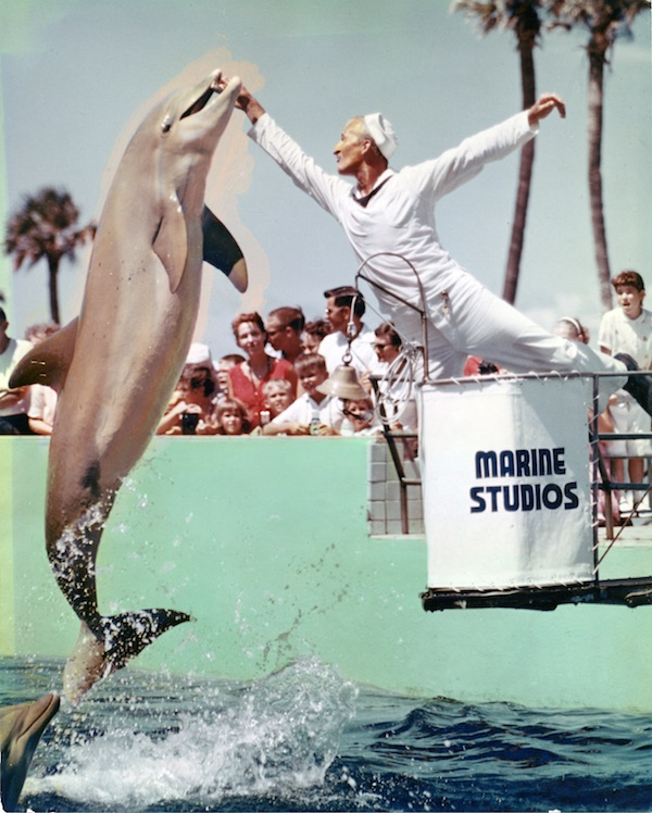 A dolphin leaps for a trainer at Marine Studios in St. Augustine, Florida, in the 1950s. (Via Florida Photographic Collection)