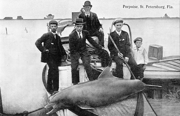 Sports fishermen flank the marine mammal they caught in this vintage postcard for St. Petersburg, Florida, in the 1910s. (Via Florida Photographic Collection)