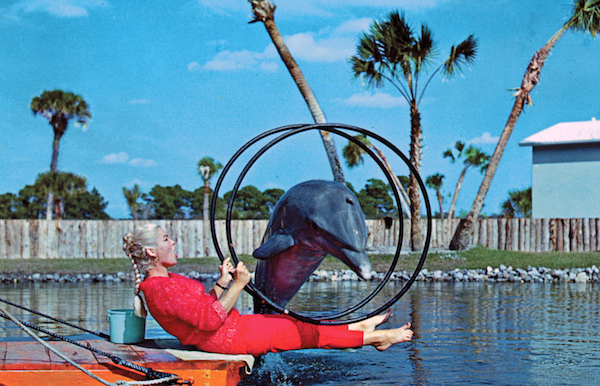 A dolphin performs at Floridaland, a short-lived Sarasota theme park open between 1964 and 1971. (Courtesy of Tim Hollis)