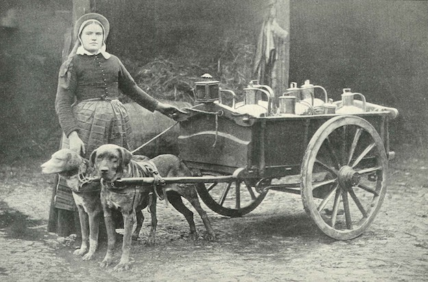 Dog-drawn milk carts like this one were a common sight in Belgium between the wars.