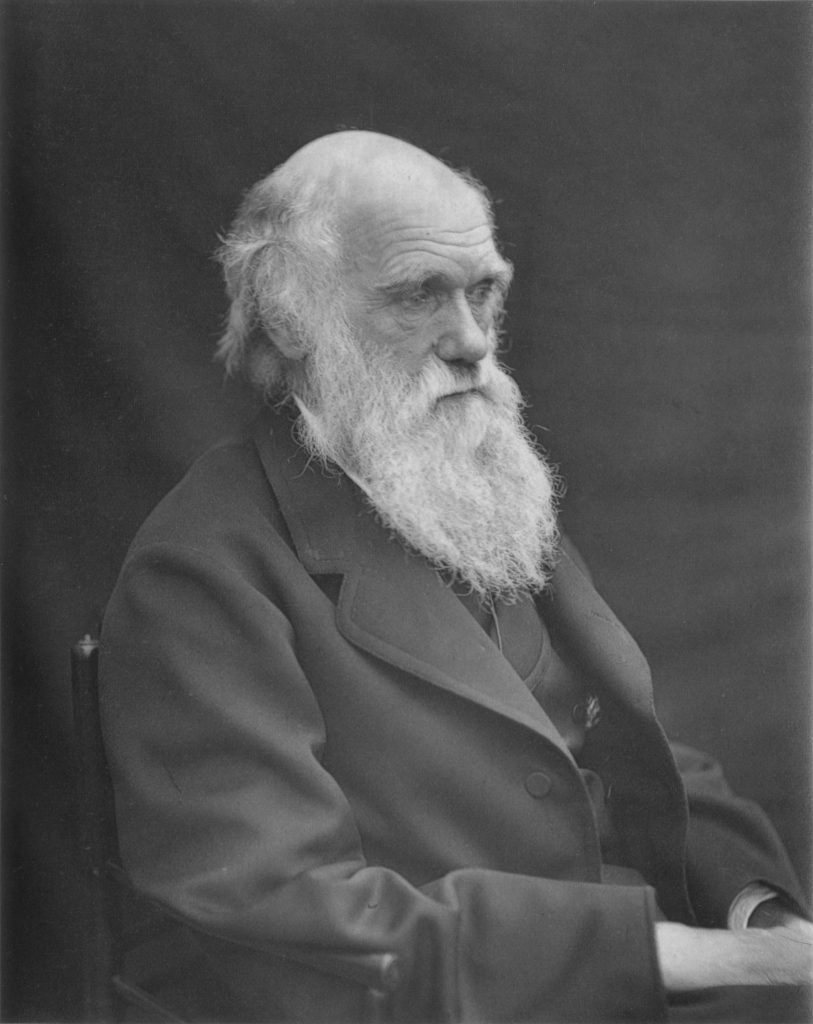 """In his landmark work, On the Origin of Species, Charles Darwin used the domesticated chickens he acquired after the collapse of """"hen fever"""" in 1855 to help make his case for his theory of natural selection."""